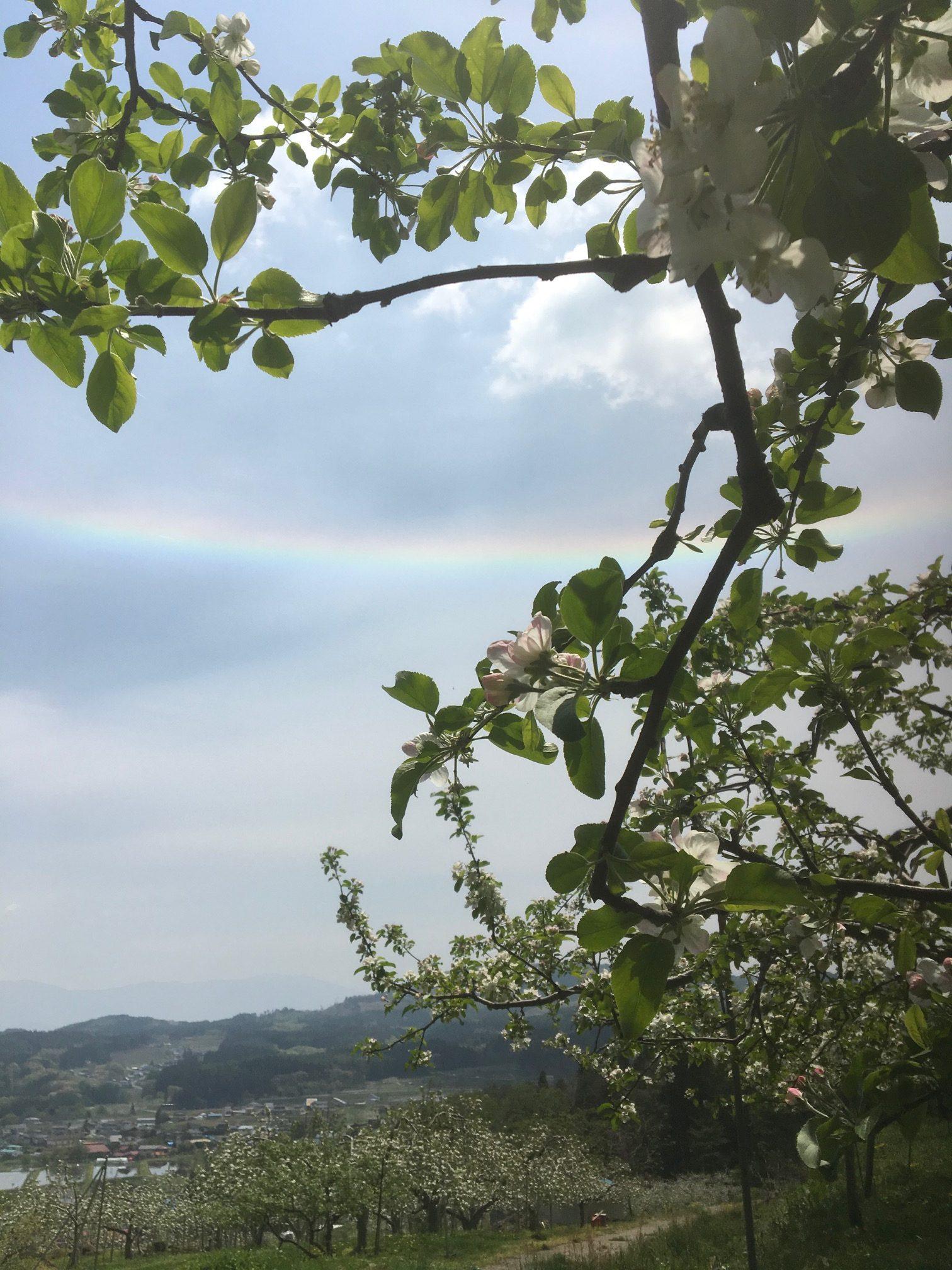 素敵な現象に出会う 虹と林檎の花のコラボ